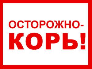 корь, о кори, внимание корь, Калуга, Калужская область, профилактика, вакцина, эпидемия